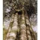 Rata Vine Tree – Greeting Card