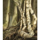Visions Forest – Greeting Card