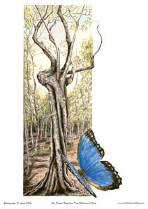 Dry Forest Tree – Page Print