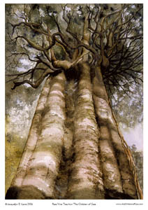CGA4P03P06&07_Rata-Vine-Tree