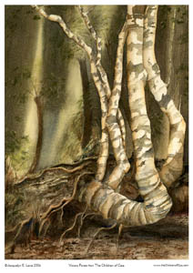 Visions Forest – Page Print