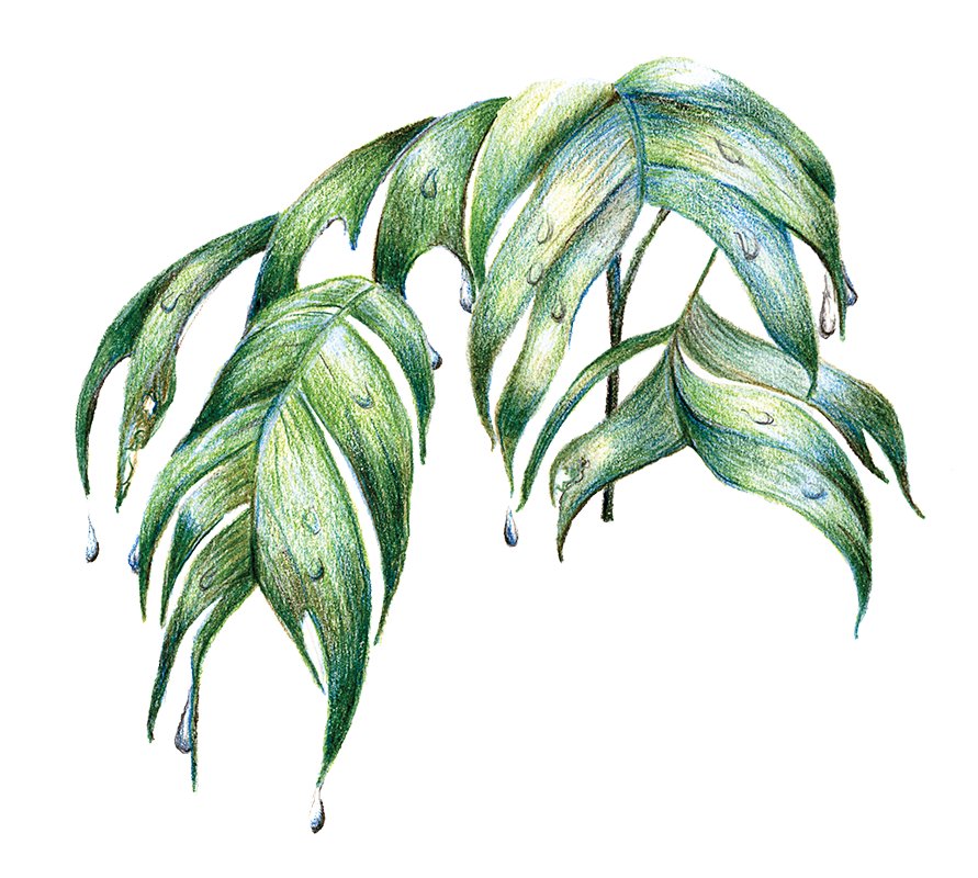 Rainforest Palm Leaves by Jacquelyn E. Lane