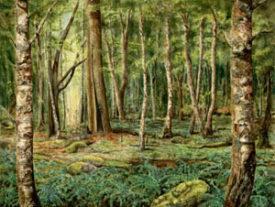 Moonwood Spring – Large Print
