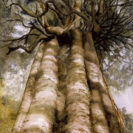 Rata Vine Tree – Large Print