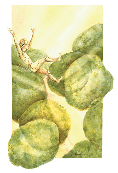 Khoros-Sylvan Elf in spongey mesophyl leaf cells