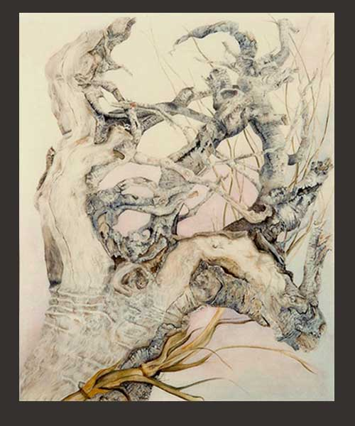 Driftwood Roots-watercolour by Jacquelyn E Lane
