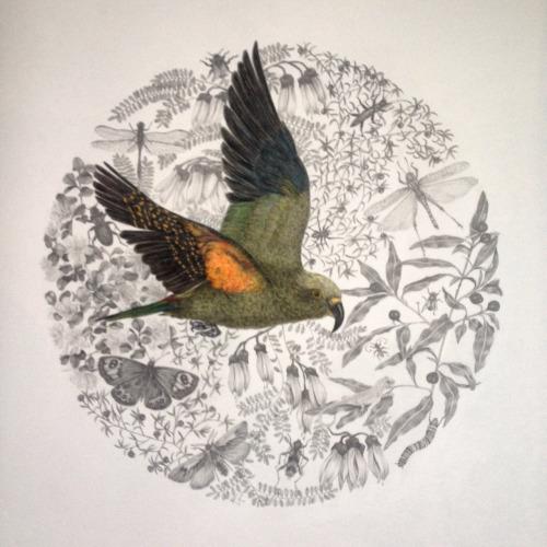 Kea by Karyn Roberts NZ artist