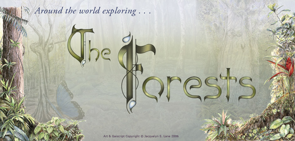 The Forests Header Image-Jacquelyn E Lane